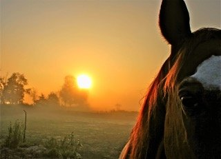 A photograph of a horse's head with the sun in the background.